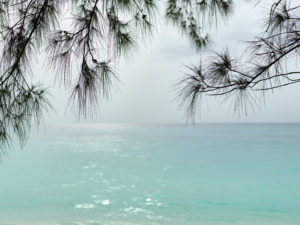 Bimini pine trees frame an afternoon seascape, The Bahamas.