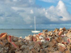 Caribbean conch shell pile on Bimini's bay, The Bahamas.